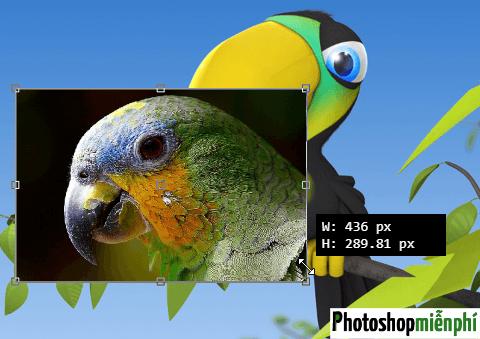 Cách mở 2 ảnh cùng lúc trong Photoshop online